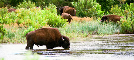 Oklahoma Motorcycle Tours Wildlife